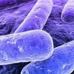 Com funciona a bacteria para fossa