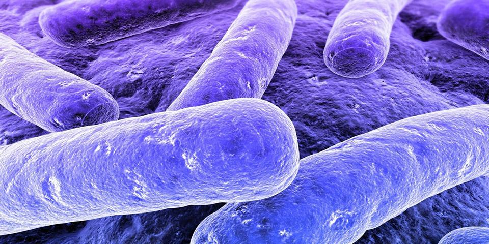 Como funciona a bactéria para fossa?