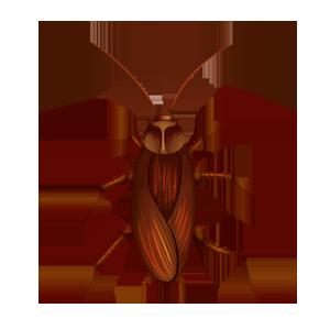 evita insetos