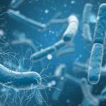 Bactérias ao seu favor Veja como microrganismos previnem entupimentos do seu saneamento básico