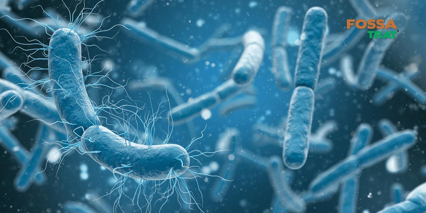Bactérias ao seu favor. Veja como microrganismos previnem entupimentos do seu saneamento básico