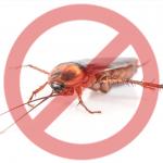 Banner com imagem de barata e um símbolo de cancelado sobre o inseto