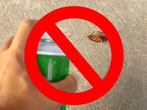 Como administrar o problema daaparição de insetos indesejados na sua casa CORPO blog_opt