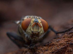 O que pode causar o aparecimento de insetos CORPO blog_opt