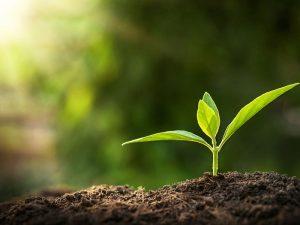 O que são produtos ecologicamente corretos CORPO blog_opt