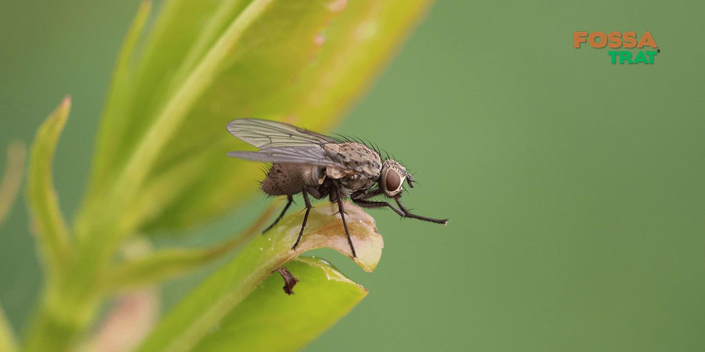 Produto para prevenir aparições de insetos sem colocar sua saúde em risco