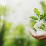 Produtos ecologicamente corretos para limpeza de sua residência