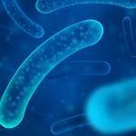 Tratamento biológico como agem as bactérias no combate ao entupimento e mau cheiro