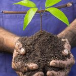 Homem segurando uma muda de planta na mão