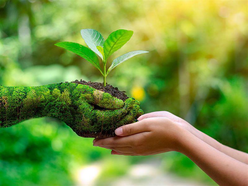 Mãos de duas pessoas, uma toda revestida com imagens de árvores, entregando muda de planta para a outra mão