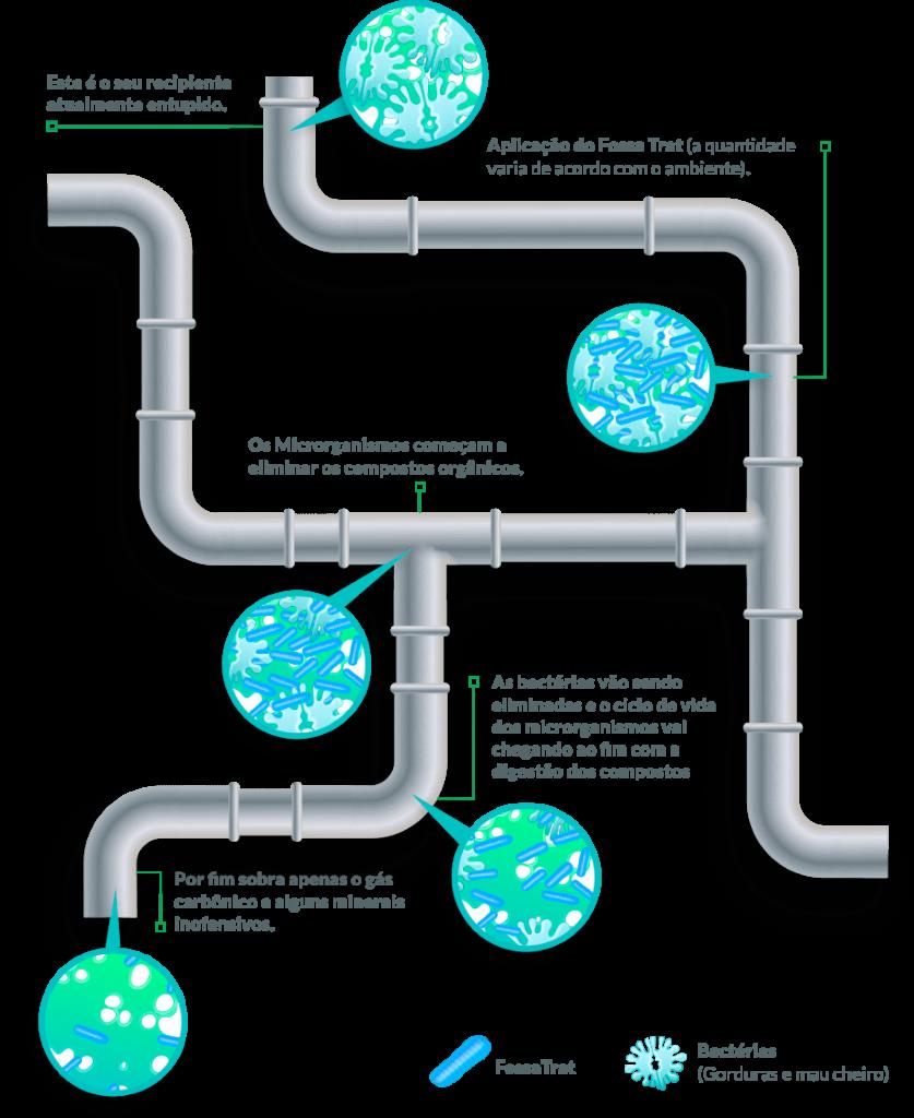 Esquema gráfico mostrando como age o Fossa Trat